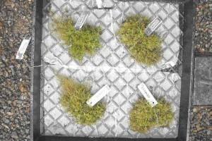 Moss in Prisons